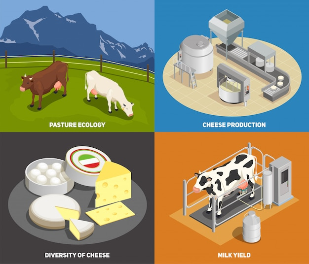 Kaasproductie concept set weiland melkopbrengst productie diversiteit van kaas vierkante pictogrammen isometrisch Gratis Vector