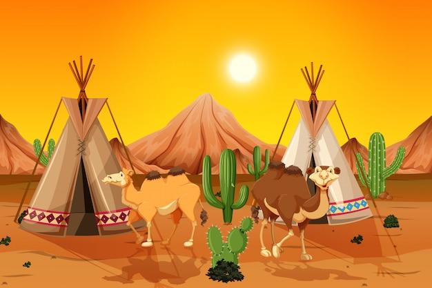 Kamelen en tipi in woestijn Premium Vector