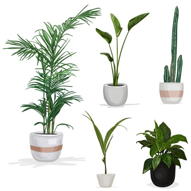Kamer planten Gratis Vector