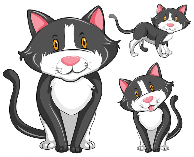 Kat in drie verschillende posities Gratis Vector