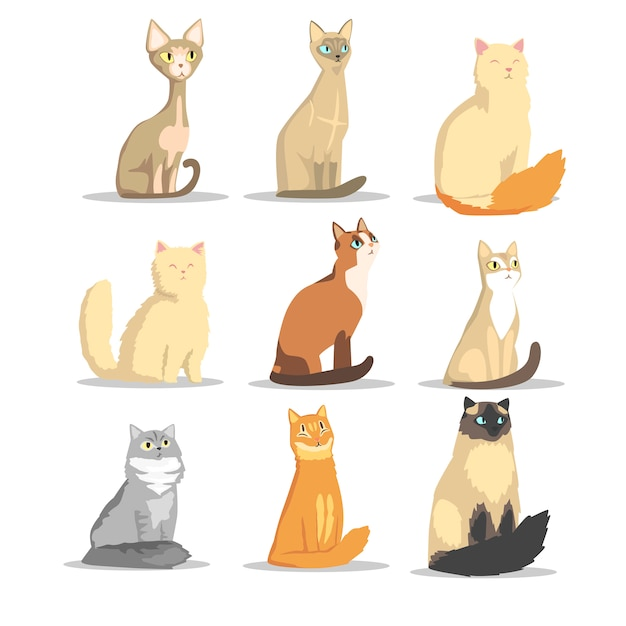 Kat verschillende rassen set, schattige huisdieren illustraties Premium Vector
