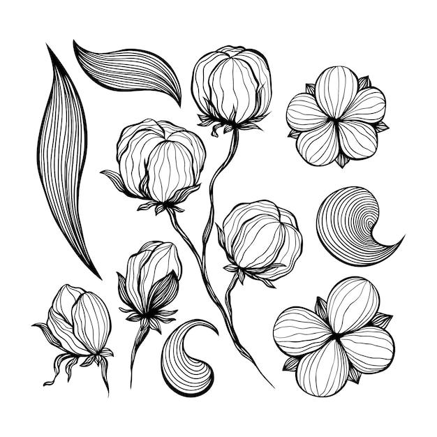 Katoen bloemen abstracte lijntekeningen contour tekeningen. Gratis Vector