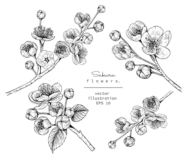 Kersenbloesem sakura bloemtekeningen Premium Vector