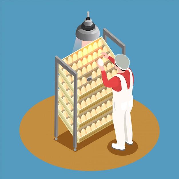 Kippenboerderij isometrisch ontwerpconcept met incubatorrek en werknemer die door kippeneieren kijken Gratis Vector