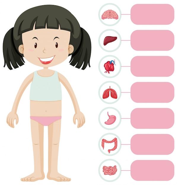 Klein meisje en verschillende delen van het lichaam Premium Vector