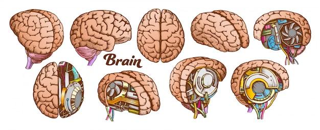 Kleur brain set collectie Premium Vector