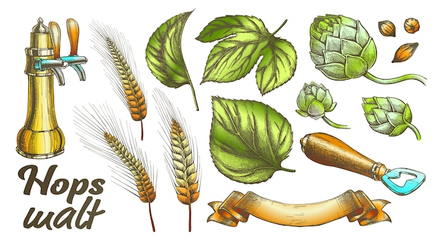 Kleur hop bladeren gerst tarwe rogge ooropener set. Premium Vector