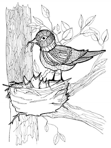 Kleurplaat met vogels tekenen Premium Vector