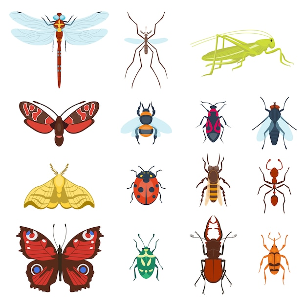 Kleurrijke bovenaanzicht insecten pictogrammen geïsoleerd Premium Vector