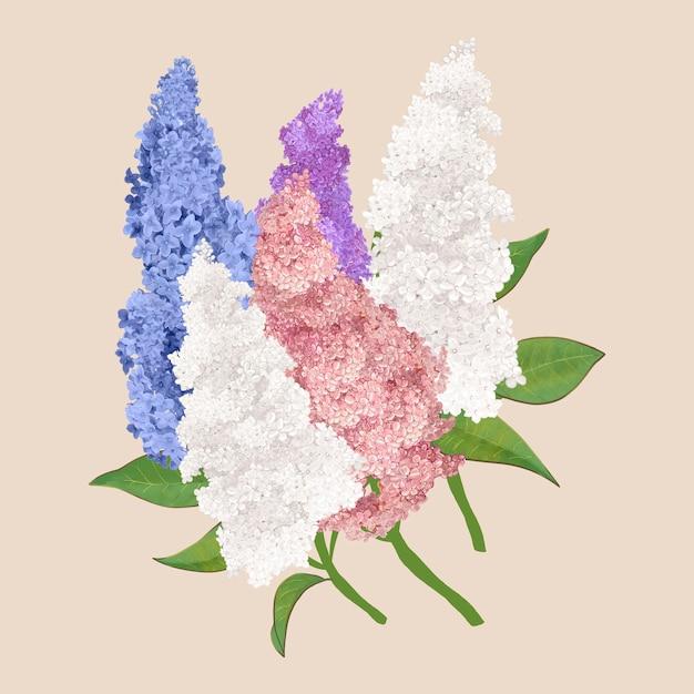 Kleurrijke lila bloemen Gratis Vector
