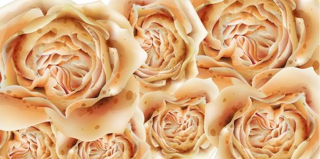 Kleurrijke rozen in waterverf Premium Vector