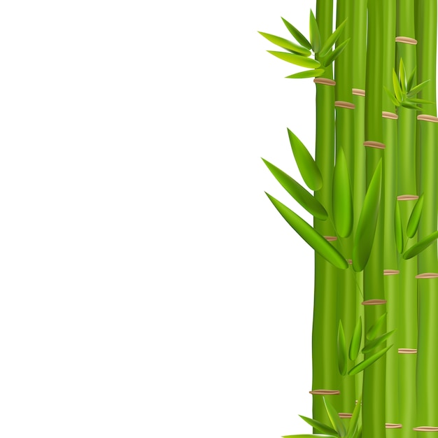 Kleurrijke stengels en bamboebladeren Premium Vector