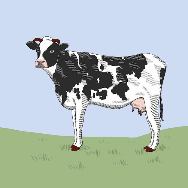 Koe die zich op het gras bevindt. Premium Vector
