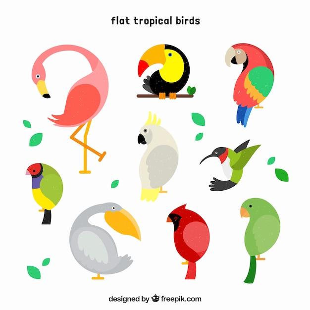 Koele set van tropische vogels Gratis Vector