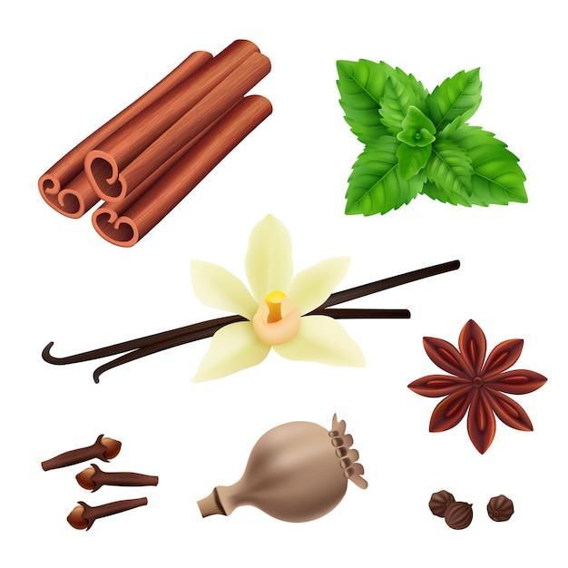 Kruiden en specerijen. de kaneelveganist verlaat verse vanillezaden voor het koken van vectorkruiden realistische inzameling Premium Vector