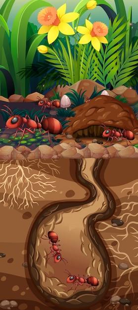 Landschapsontwerp met rode ondergrondse mieren Gratis Vector