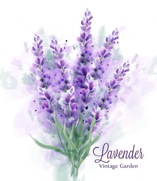 Lavendel boeket aquarel Premium Vector
