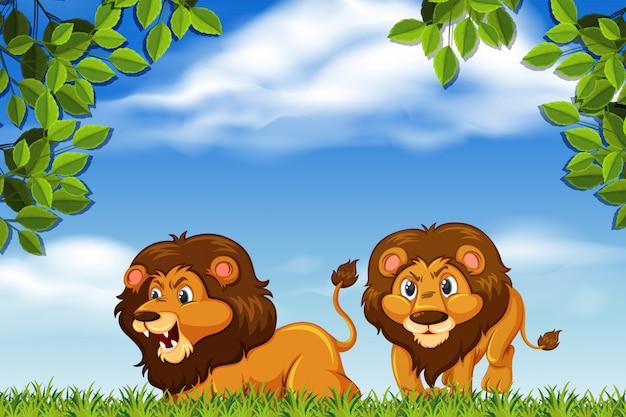 Leeuwen in bosscène Premium Vector