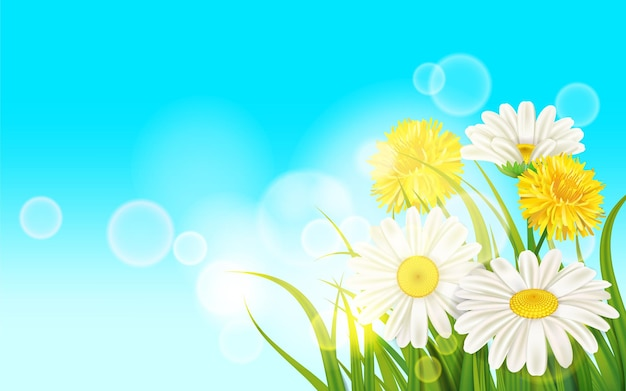 Lente bloem madeliefje sappig, chamomiles gele paardebloemen op groen gras Premium Vector