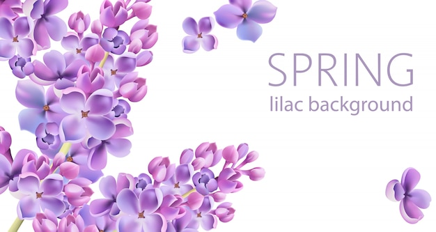 Lente lilac bloemachtergrond met plaats voor tekst Gratis Vector