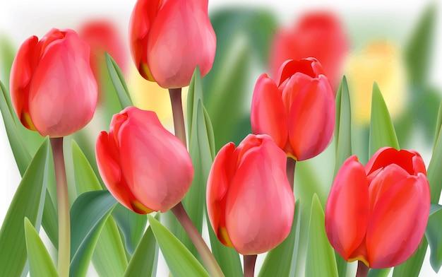 Lente tulp bloemen veld Premium Vector