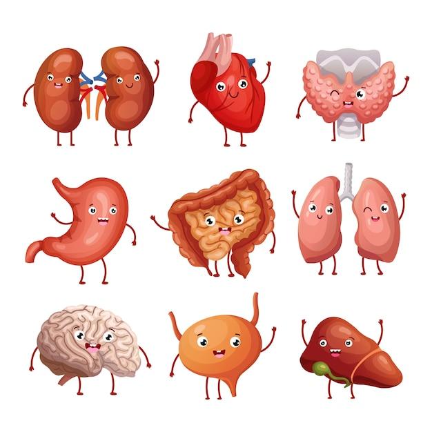 Leuke cartoon menselijke organen. maag, longen en nieren, hersenen en hart, lever. grappige binnenorganen vector anatomiekarakters Premium Vector
