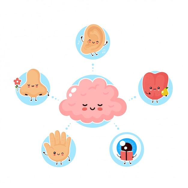 Leuke gelukkige vijf menselijke zintuigen rond de hersenen. zien, horen, ruiken, voelen, proeven. vlakke afbeelding .menselijke neus, oog, hand, oor, tongzintuigen poster concept Premium Vector