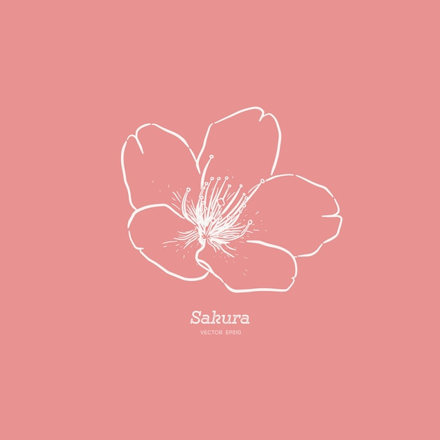 Leuke hand getrokken sakura bloem illustratie. Premium Vector
