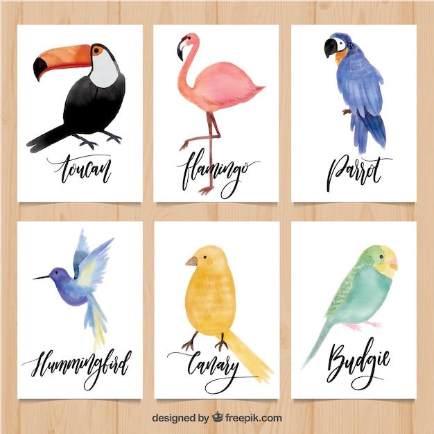 Leuke kaarten met verscheidenheid aan aquarelvogels Gratis Vector
