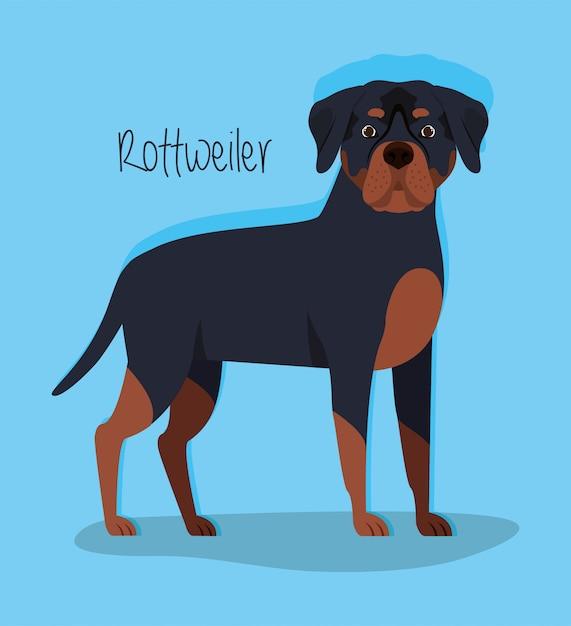 Leuke rottweiler hond huisdier karakter Premium Vector