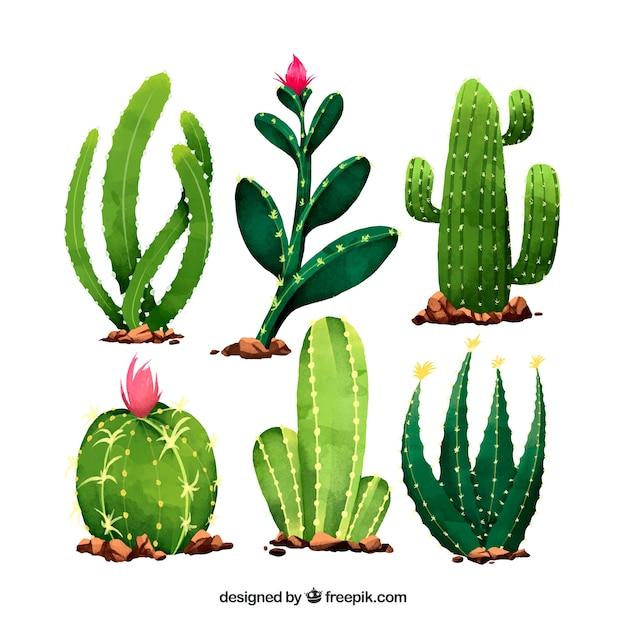Leuke set van cactussen met aquarelstijl Gratis Vector