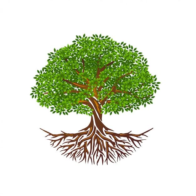 Levensboom of boom en wortels vector geïsoleerd, boom met ronde vorm Premium Vector