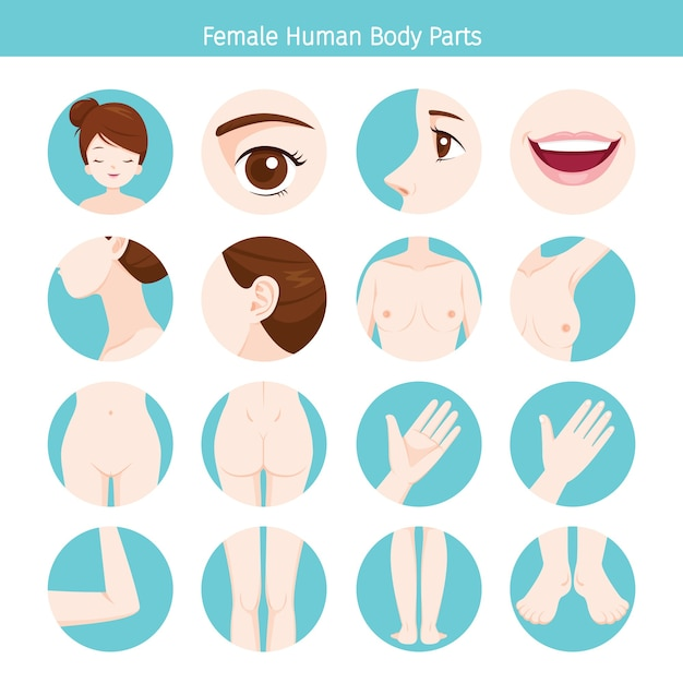 Lichaamsset voor vrouwelijke menselijke externe organen Premium Vector