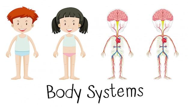 Lichaamssystemen van jongen en meisje Gratis Vector