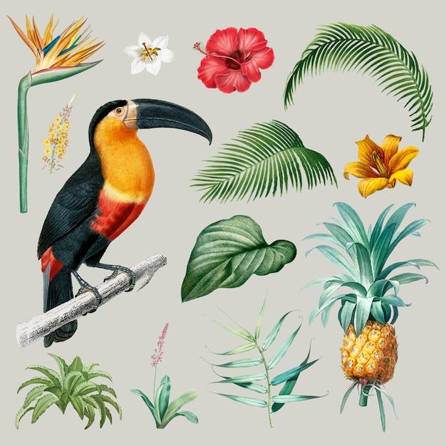 Macaw gebladerte illustratie Gratis Vector