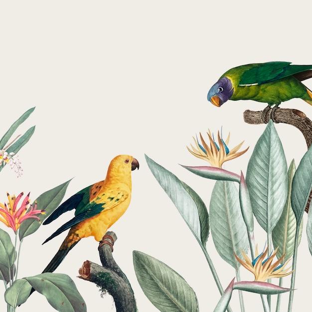 Macaw tropische illustratie Gratis Vector