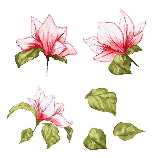 Magnolia bloemencollectie. geïsoleerde realistische bladeren en bloemen op aquarel Gratis Vector