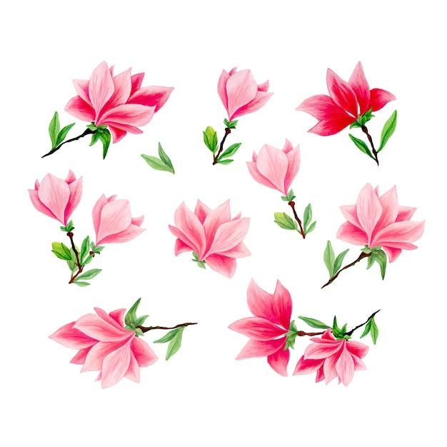 Magnolia handgetekende illustraties instellen Gratis Vector