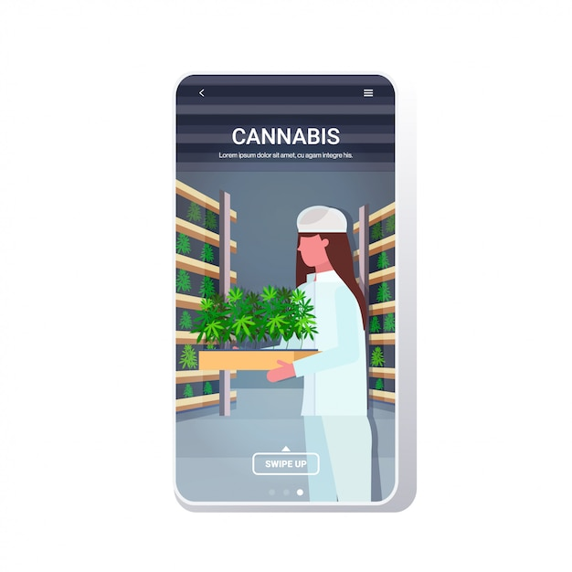 Marihuana concept drugsgebruik agribusiness telefoonscherm mobiele app Premium Vector
