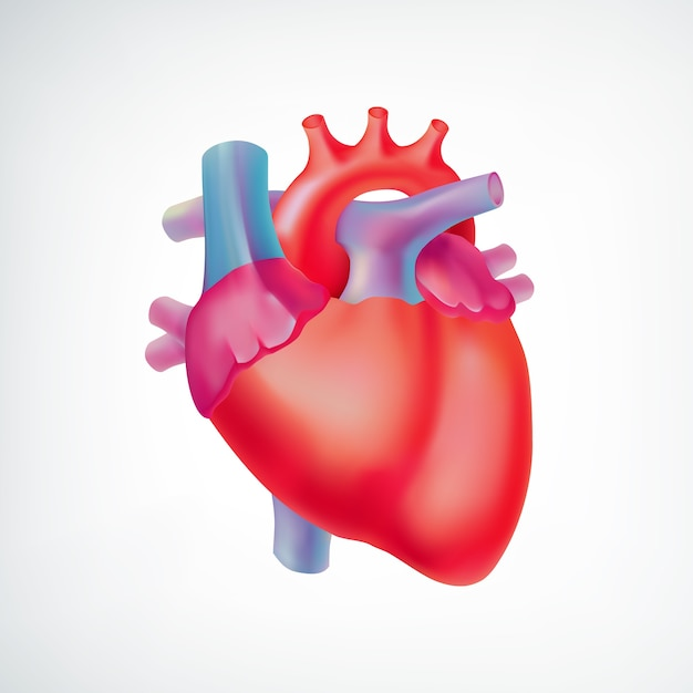 Medisch licht orgel anatomisch concept met kleurrijk menselijk hart op geïsoleerd wit Gratis Vector