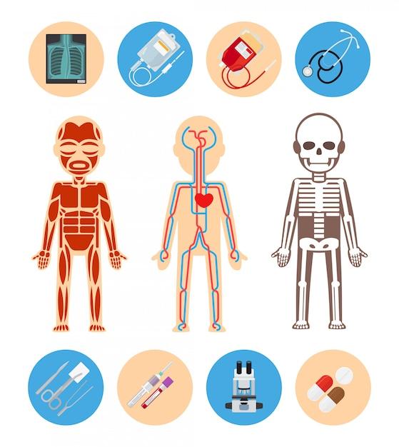 Medische infographicselementen Premium Vector