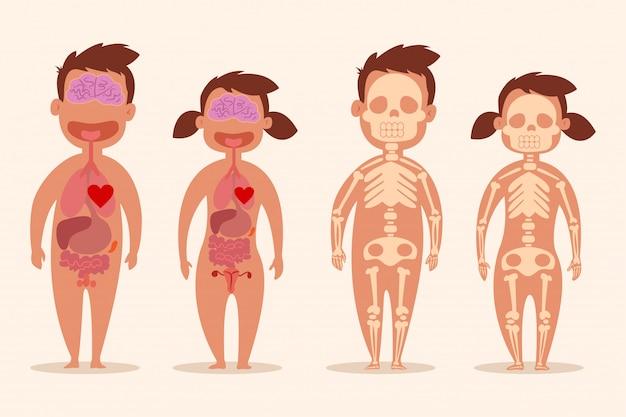 Menselijk inwendig orgaan. mannelijke en vrouwelijke skeletten. lichaamsanatomie van een man en een vrouw. vector cartoon illustratie geïsoleerd Premium Vector