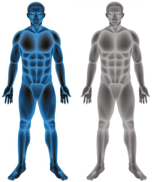 Menselijk lichaam op wit Gratis Vector