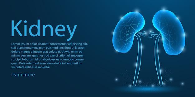 Menselijk nier medisch, laag polyconcept. Premium Vector