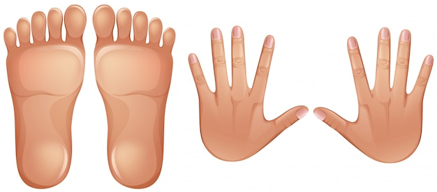 Menselijke anatomie voeten en handen Premium Vector