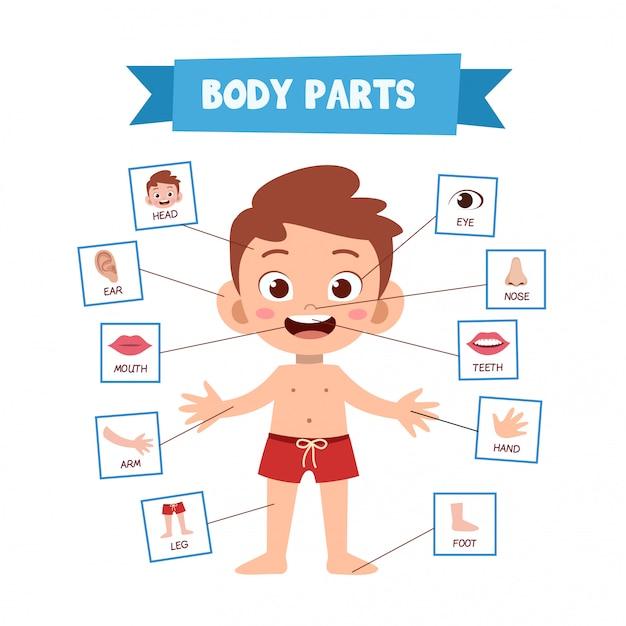 Menselijke lichaamsdelen Premium Vector