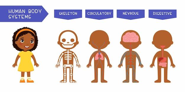 Menselijke lichaamssystemen educatieve kinderen illustratie Gratis Vector