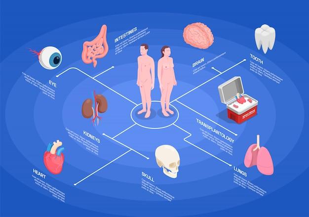 Menselijke organen isometrische stroomdiagram met nieren hart oog longen tand hersenen op blauwe achtergrond 3d Gratis Vector