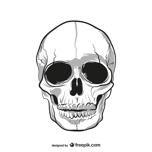 Menselijke schedel tekening Gratis Vector