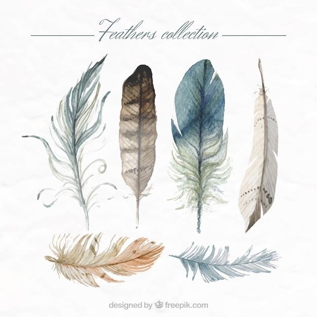 Met de hand beschilderd veren collectie Gratis Vector